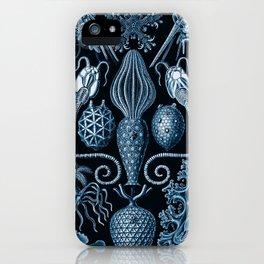 Ernst Haeckel Amphoridea Sea Life iPhone Case