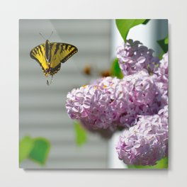 Pollination - Series; 3 of 3 Metal Print