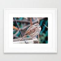 sparrow Framed Art Prints featuring sparrow by ACamp