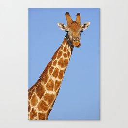 The Giraffe Canvas Print