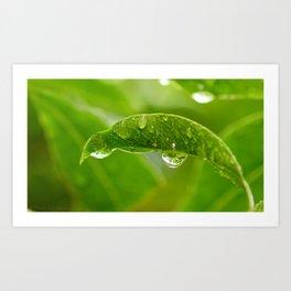 Rain Drops on Leaf Art Print