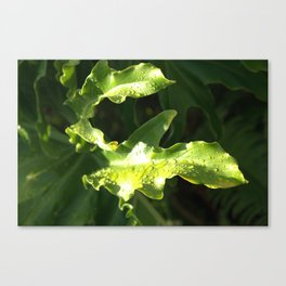Rain on Leaf, Oahu Canvas Print