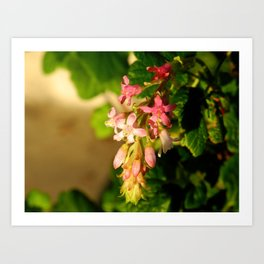 Native Flowers Art Print