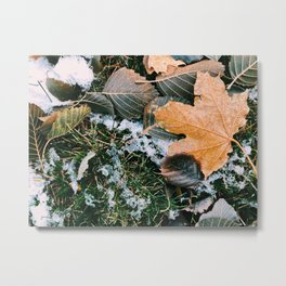Autumn leaves in winter Metal Print