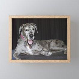 Happy Great Dane Framed Mini Art Print