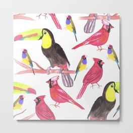 Toucans, cardinals and gouldian finch in tetrad color scheme Metal Print