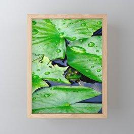 Peek  A Boo frog Framed Mini Art Print