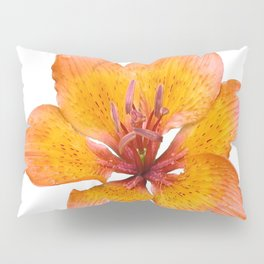 Coral Colored Lily Isolated on White Pillow Sham