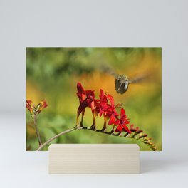 Hummingbird Materializing Mini Art Print