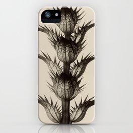 Karl Blossfeldt, Acanthus mollis iPhone Case