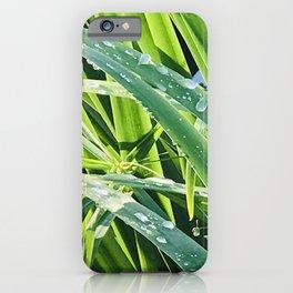 Fine Art Elegant Grass With Rain Drops Close-Up iPhone Case