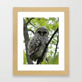 Bard Owl baby Framed Art Print