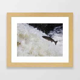 salmon leaping up the waterfall Framed Art Print