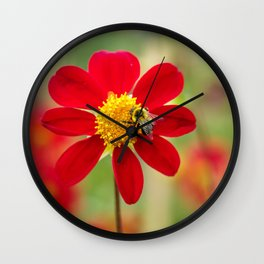 Bee on a Red Dahlia Wall Clock