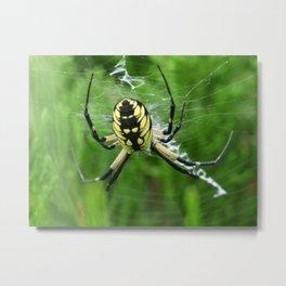 garden spider 2014 II Metal Print