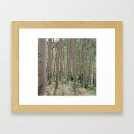 Guardsman Pass Aspen Trees Framed Art Print
