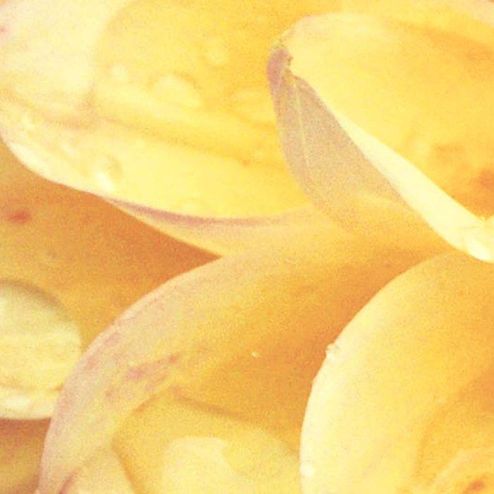Pretty Yellow Dahlia Leggings