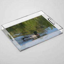 Mallard Duck with reflection on lake Acrylic Tray