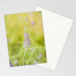 Lavender flower Stationery Cards