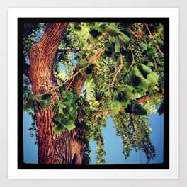 Oak Tree, Ghost Ranch, New Mexico Art Print