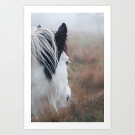 Profile of a Black and White Horse Art Print