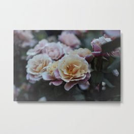 Dusk Rose Metal Print