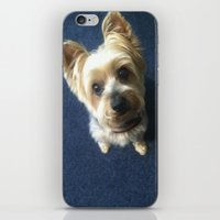 yorkie iPhone & iPod Skins featuring Yorkie by indigo2