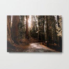 Walking Sequoia 4 Metal Print