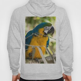 Parrots couple in the tree tops Hoody