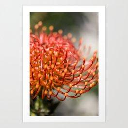 Exotic Pin Cushion Protea Flower- Botanical Photography #Society6 Art Print