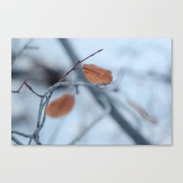 Duck for Cover Canvas Print