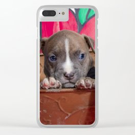 Cute Brother and Sister Pitbull Puppies with Blue Eyes Cuddling Together in a Spring Basket Clear iPhone Case