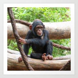 Chimpanzee_20150503_by_JAMFoto Art Print