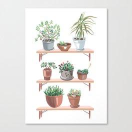 flowerpots on the shelves Canvas Print