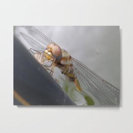 dragonfly molting Metal Print
