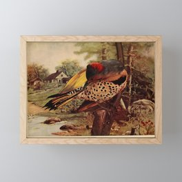 Neltje Blanchan - Bird Neighbours (1903) - Northern Flicker Framed Mini Art Print
