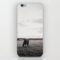 Horses in a Field in Black and White iPhone & iPod Skin