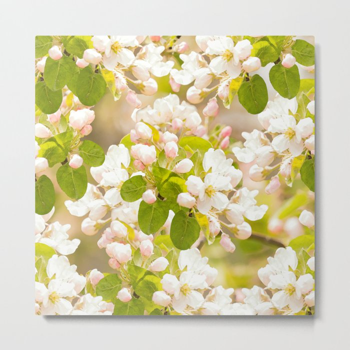 Apple tree branches with lovely flowers and buds on a pastel green background Metal Print