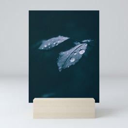 Rain Drops on the Leaves of a Rose Bush. Fine Art Photography. Mini Art Print