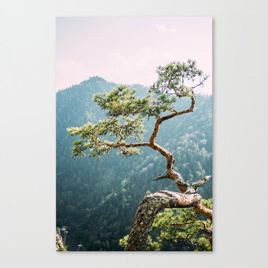 Sokolica Mountain Pine Tree Canvas Print