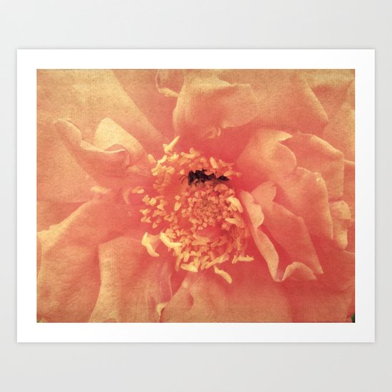 Bumblebee Rose  Art Print
