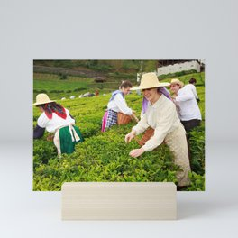 Porto Formoso tea gardens Mini Art Print