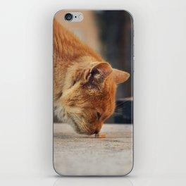 Toffee cat iPhone Skin