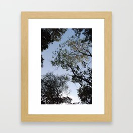 viewing the canopy  Framed Art Print