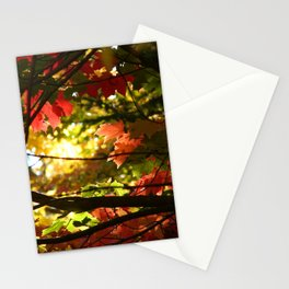 Maples in the Fall Stationery Cards