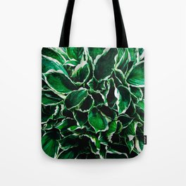 Hosta undulata albomarginata vibrant green plant leaves Tote Bag