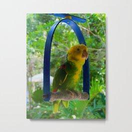 Yellow Headed Parrot Metal Print