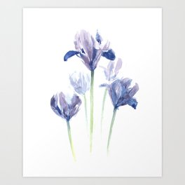 Watercolor iris print Art Print