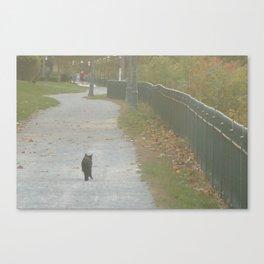 Winding Path Canvas Print