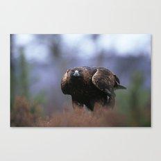 GOLDEN EAGLE STANCE Canvas Print